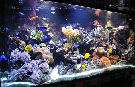 Pakan Untuk Ikan Hias Air Laut cara mudah merawat ikan hias air laut taryono