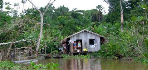 Hutte Sur Pilotis by Les News 16excursions En Amazonie