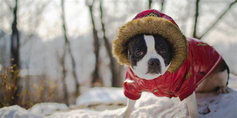 puppy cold die s 252 223 esten tier der welt fotos