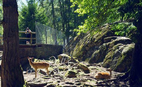 zoologischer garten wetter alpiner zoologischer garten tierparks in salvan les