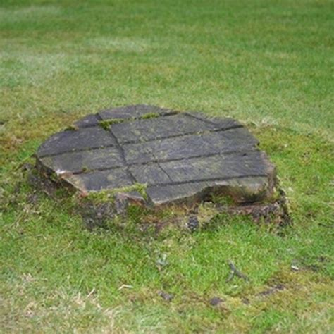 removing decorations 25 best ideas about removing tree stumps on