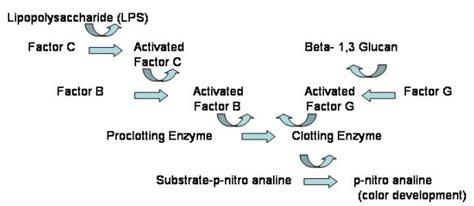 file lal enzyme cascade jpg wikimedia commons