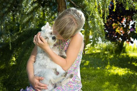 home remedies for dogs cats fleas skin cuts and