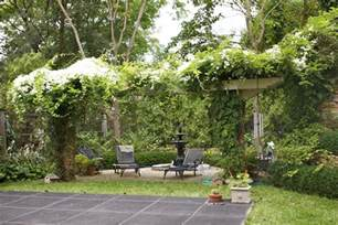 Best Vines For Pergola by Yard On Pinterest Passion Flower Poppies And Flowering
