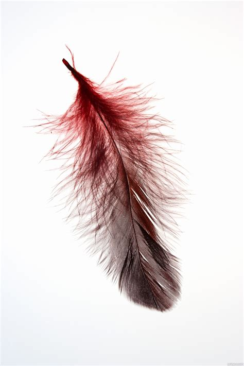 www feather floating feather picture by friiskiwi for bird feather
