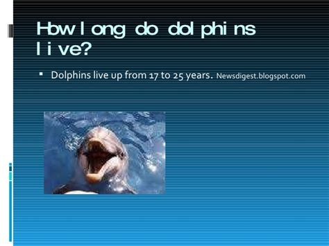 how many years does a live dolphins presentation