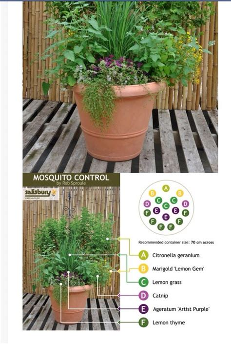 How To Keep Mosquitoes Away From Front Door 17 Best Images About Mosquito Repellent Planters On Mosquito Trap Tiered Planter