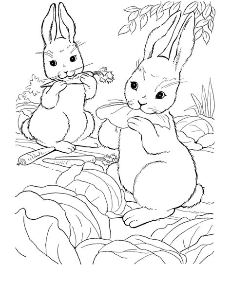rabbit hutch coloring page bunny rabbit drawings coloring home