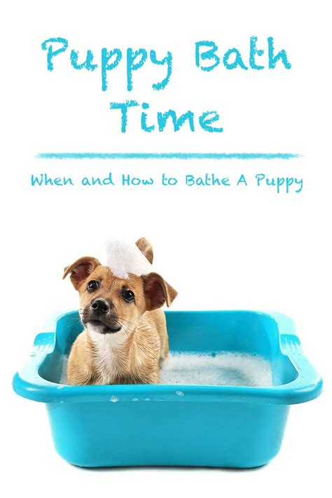 make bathtime fun for your dog make bathtime fun for your dog dog owners share photos