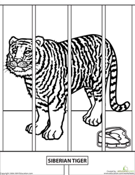 coloring page of a siberian tiger color the zoo tiger worksheets zoos and tigers