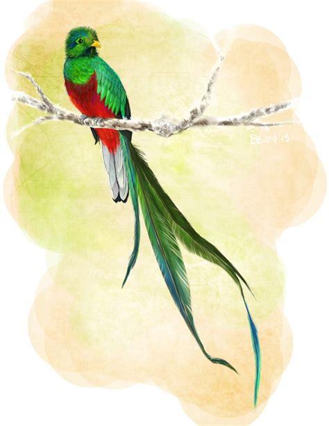 imagenes de quetzal a lapiz quetzal by bluebirdjoy on deviantart