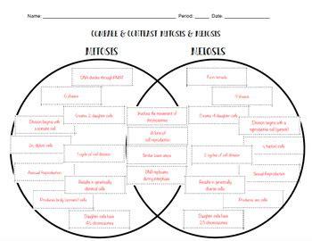 mitosis and meiosis venn diagram answers mitosis meiosis venn diagram by gowitzka s science stuff tpt