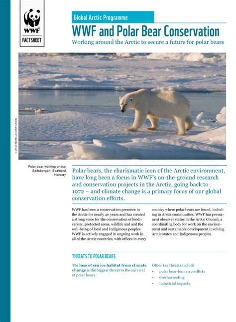 wwf charity letter what wwf is doing for polar bears wwf