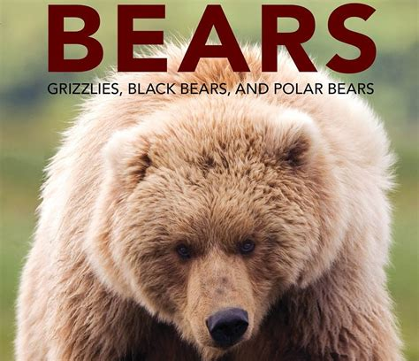 picture books about bears alaska s bears how the understanding of human