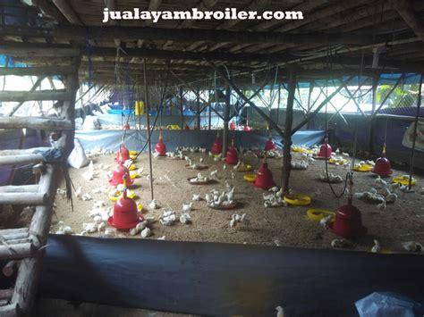 Jual Bibit Ayam Broiler Jakarta jual ayam broiler di jakarta barat jual ayam broiler