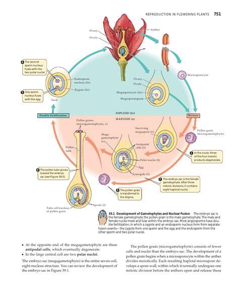 flowchart of pollination fertilization and seed development chap39