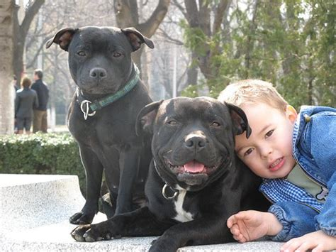 great family dogs the best family dogs 10 breeds for homes with children reflections