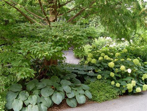 Shrub Garden Ideas Landscaping Ideas For Shady Patio With Mississippi Plants Mixed Planting Of Shrubs And