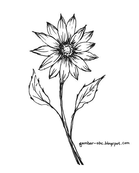 mewarnai gambar bunga krisan tunggal contoh gambar mewarnai