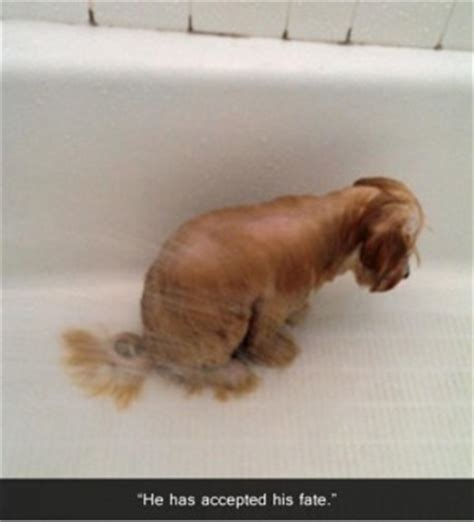 cat keeps pooping in bathtub bath funny dog quotes quotesgram