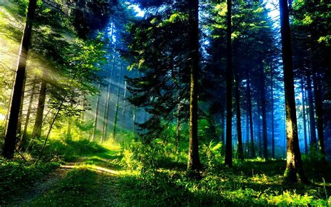 The Of The Forest top 10 forests in the world exploredia