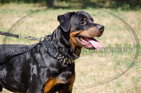 collars for rottweilers designer collar with spikes collars for rottweilers brave style