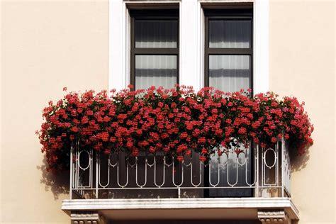 fiori in balcone fiori da balcone dai gerani alle surfinie le strategie
