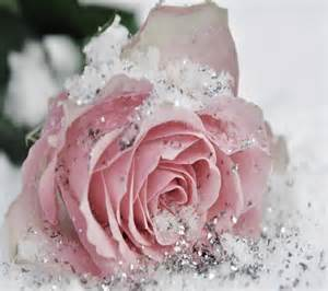 Frozen rose lovely glitter flower nature wallpaper