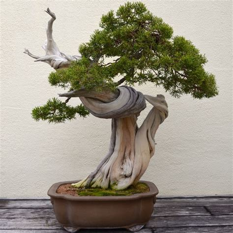 bonsai for beginners 275 best ideas about bonsai on maple bonsai crab apples and wisteria