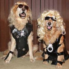 golden retriever costume for person 1000 images about golden retrievers in costume on golden retrievers dogs