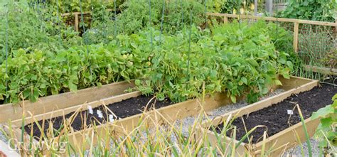 raised beds essential or expensive