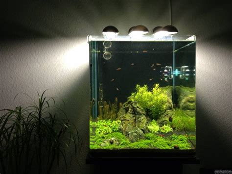 cube aquarium aquascape tumblr nano cube aquascaping nano cube 60l dennerle