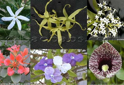 fragrant tropical plants tropical plants and seeds