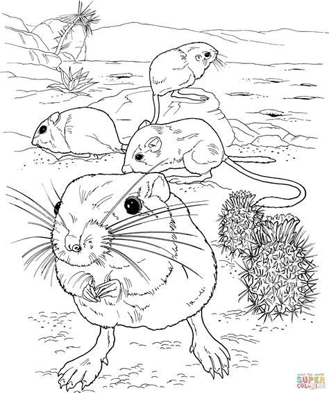 kangaroo rat coloring page giant kangaroo rats coloring page free printable