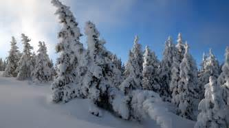 snow trees hdtv 1080p wallpapers hd wallpapers