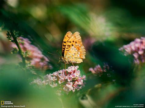 imagens da natureza borboleta