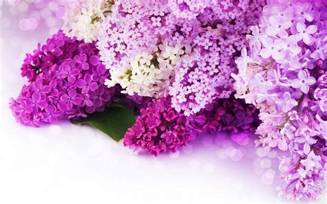 Purple Flowers Wallpapers Wallpaper Cave Free Flower Backgrounds Wallpaper Cave