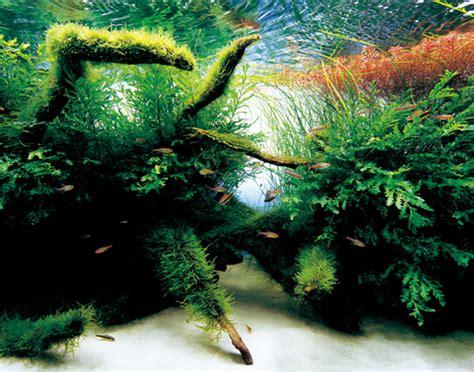 aquarium design amano indonesia aquarium by takashi amano