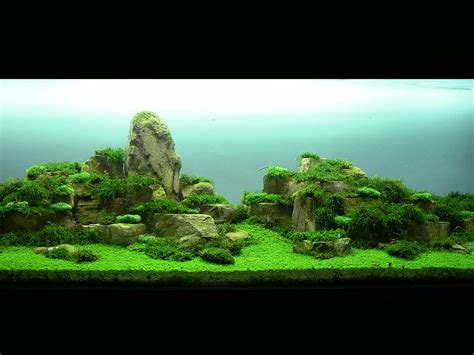 Aga Aquascaping by Ushi Kouge Aquascaping Aga Aquascaping Contest 2010