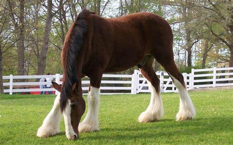 Imagenes De Gatas Blancas | imagenes de caballos