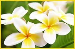fiore di tiare olio di mono 239 per corpo e capelli al tiar 232 qualit 224