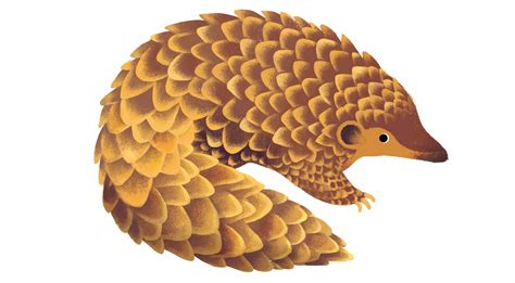 doodle pangolin celebrates world earth day with unique quiz read