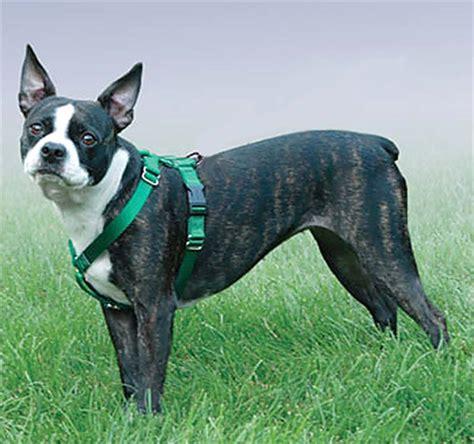 halter for dogs thunder harness for dogs thunder halter for dogs elsavadorla