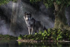 Shower Curtain White Wolf In The Forest Digital Art By Daniel Eskridge