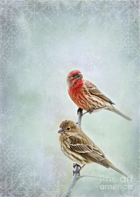 winter finches photograph by debbie portwood