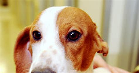pet stores in ohio that sell puppies humane society sues petland for allegedly selling sick animals ny daily news
