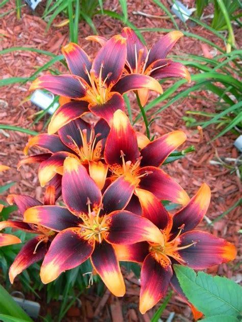 pretty plants 25 best ideas about pretty flowers on flowers beautiful flowers and pretty flower