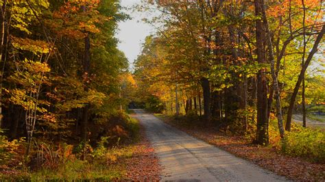 fall colors in maine bethel maine trail woods fall colors path in northern new