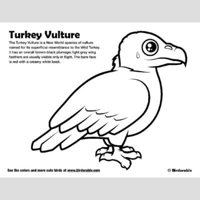 turkey vulture coloring page turkey vulture coloring download turkey vulture coloring