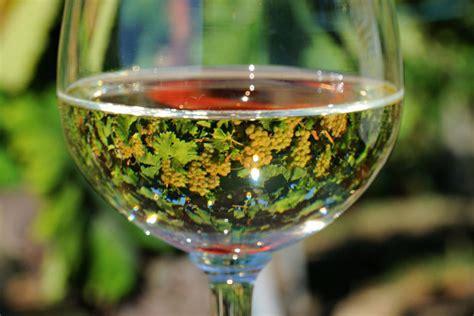 foto bicchieri di vino calorie di un bicchiere di vino